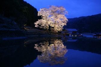 群馬県みやぎ千本桜の森