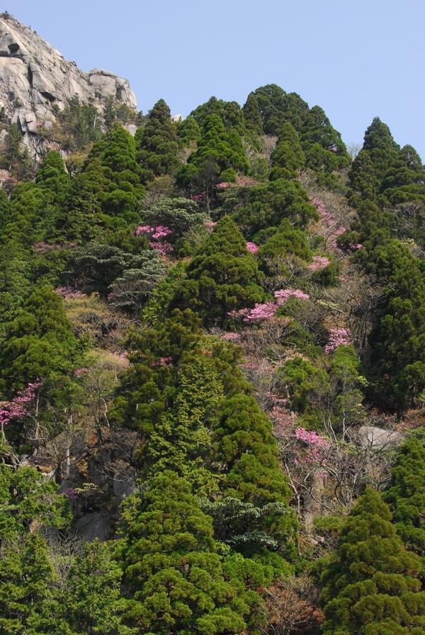 御在所岳は花崗岩で形成され、春にはツツジ科の花が多く楽しめる(景観一例)