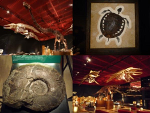 館内 化石展示室