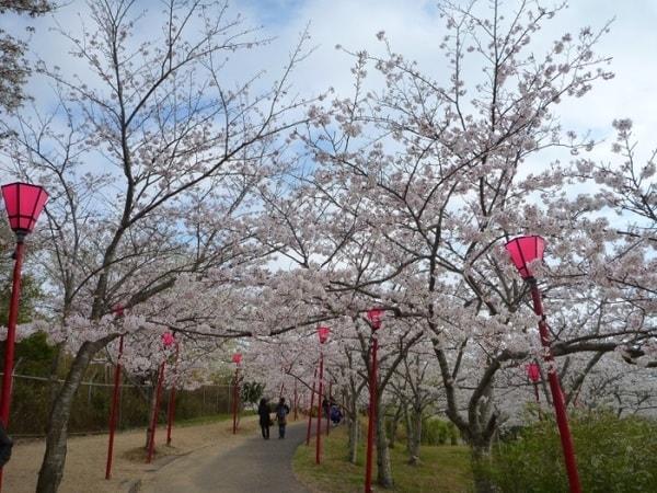 3月下旬から4月上旬にかけて「桜まつり」が開催(景観一例)