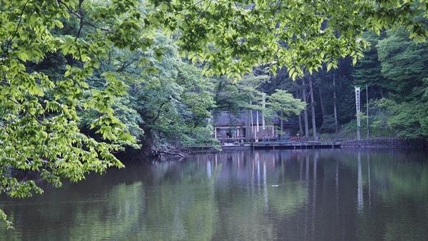 人面魚が泳ぐ、善宝寺本堂の裏手にある貝喰の池(景観一例)