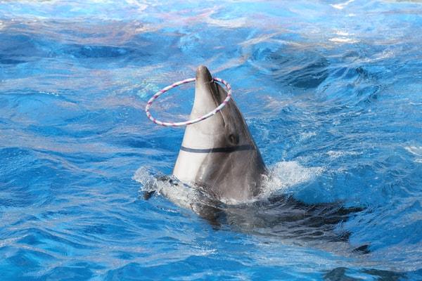 イルカのパフォーマンス
