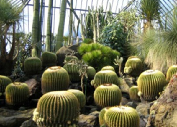 園内 世界各国から集めた約1500種類のサボテンや多肉植物を展示(景観一例)