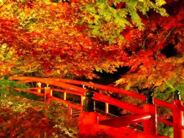 紅葉ライトアップ(景観一例)
