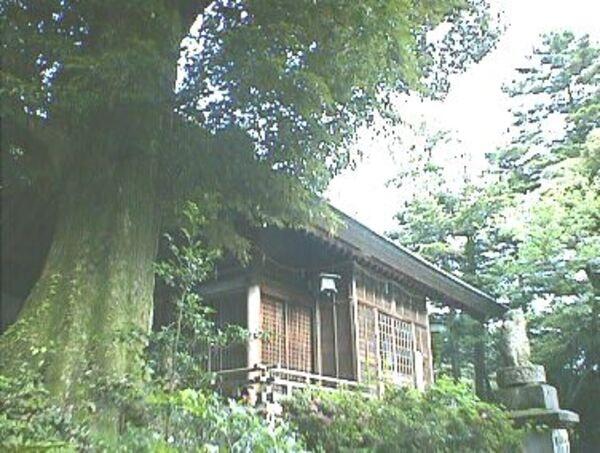 服部神社 巨木