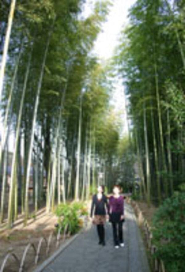 竹の小径(景観一例)