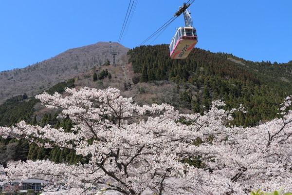 桜とつるみ号