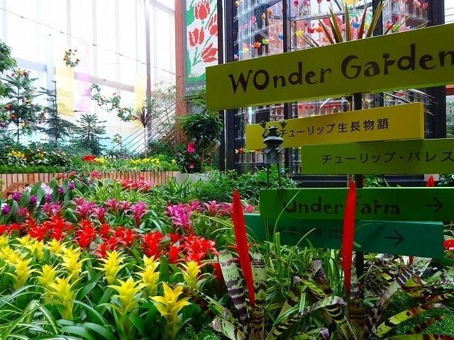 チューリップ四季彩館常設展「季節を彩る花々」~盛夏~