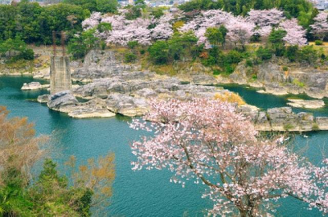 【桜・見ごろ】美濃田の淵