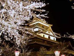 【桜・見ごろ】松江城山公園