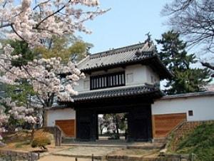 【桜・見ごろ】亀城公園