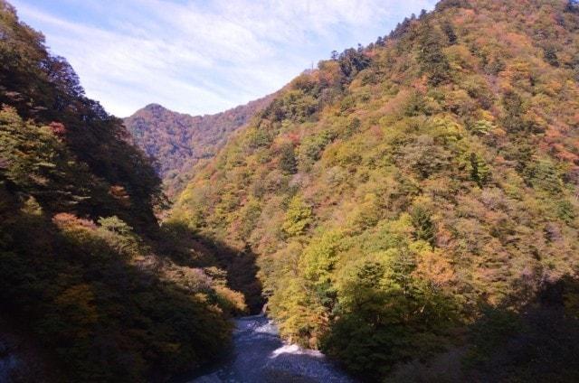 【紅葉・見ごろ】丹沢大山国定公園・県立丹沢大山自然公園