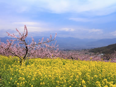 【石和温泉】春夏秋冬、魅力満載の「果物と温泉の郷」