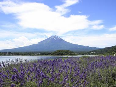 【河口湖温泉】秀峰・富士や花など、美しい自然美がお出迎え