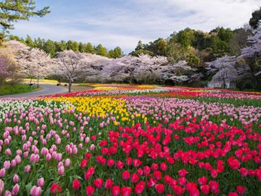 【浜名湖かんざんじ温泉】美しい湖と綺麗な花々をぜひ一度