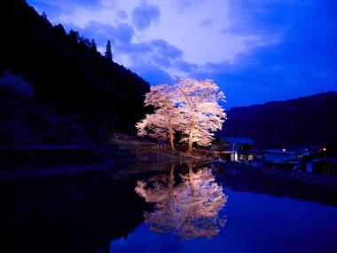 【下呂温泉】美人の湯と苗代桜を満喫しよう