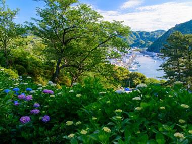 【下田温泉】紫陽花も楽しめる南国情緒と歴史情緒ある温泉地
