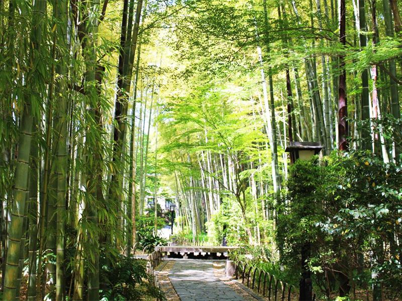 【修善寺温泉】竹林の中に情緒あふれる旅館が立ち並ぶ