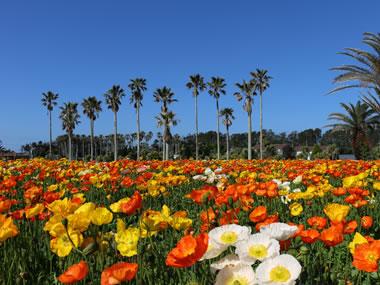 【白浜温泉】色とりどりの花摘み畑や広大な海がお出迎え