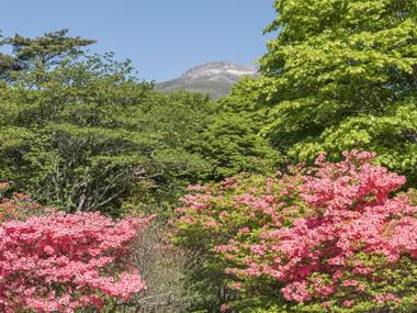 【那須温泉】豊かな自然と名湯と美しい花々を望む