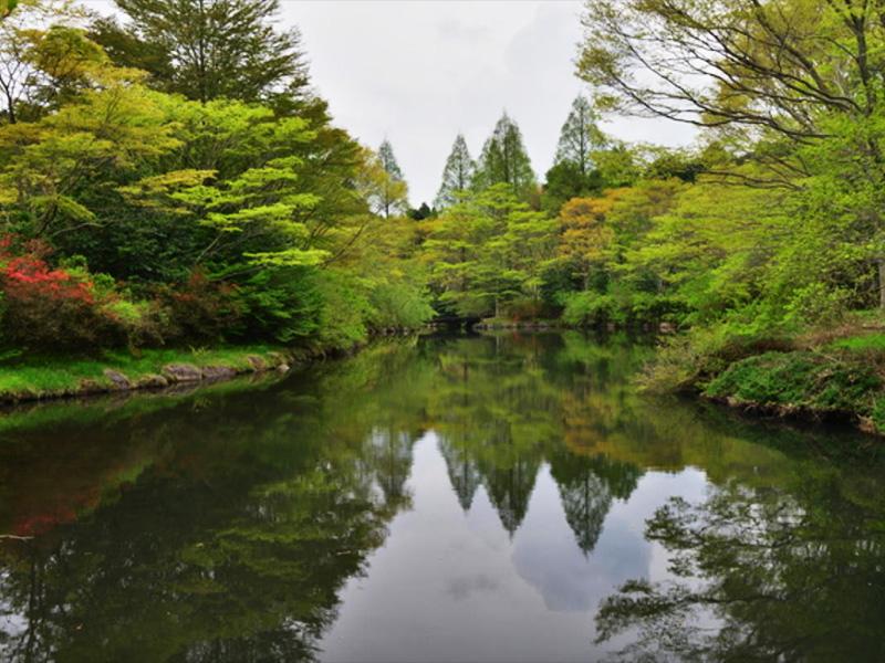 【箱根峠温泉】富士山を望む原生林の中に佇むリゾート地