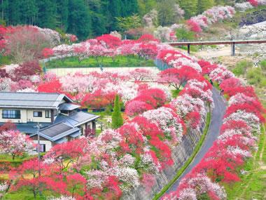 【昼神温泉】日本一の星空とはなももが美しい村にある山あいの閑静な温泉