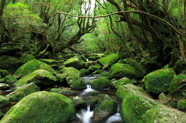 【尾之間温泉】世界遺産の島で地元住民と共に楽しむ温泉地