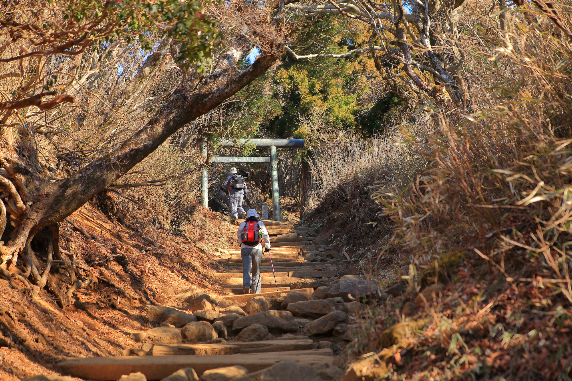 【伊勢原温泉】名山「大山」を臨む温泉でパワーをもらおう