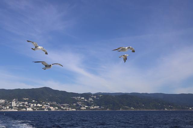 【宇佐美温泉】海沿いの駅チカ温泉は、日本一の大観音のお膝元