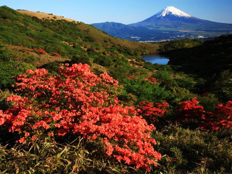 【畑毛温泉】本物の自然が残る効能豊かな国民保養温泉