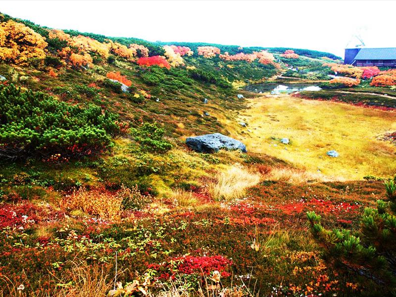 【旭岳温泉】標高約1000mの「神々の庭」に湧く神秘の湯
