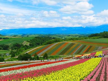 【白金温泉】にごり湯の温泉地は美しい花の丘も魅力