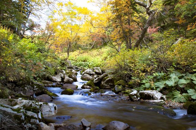 【大雪高原温泉】色彩豊かな紅葉が見事な、営業期間の短い秘湯