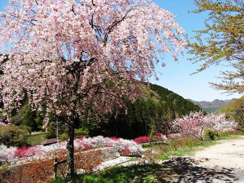 【不動温泉】日本一の星空の下、美人の湯に浸かる至福の時を満喫