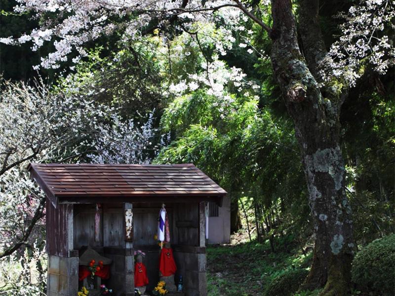 【湯田川温泉】白鷺が羽を休め、多くの文学作品を生んだ湯の里