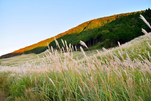【箱根仙石原 俵石温泉】標高約700mの高原で、なめらかな濁り湯を