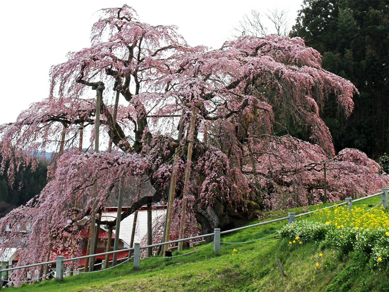 【馬場の湯温泉】名高い滝桜咲く城下町に出ずる卓効の湯