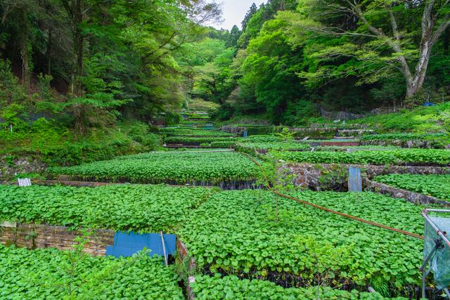 【梅木温泉】極上の温泉がオクシズに!ひとたびつかれば極楽へ