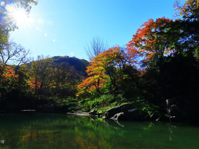 【嵐山渓谷温泉】「武蔵国の嵐山」の地で感じる歴史と自然