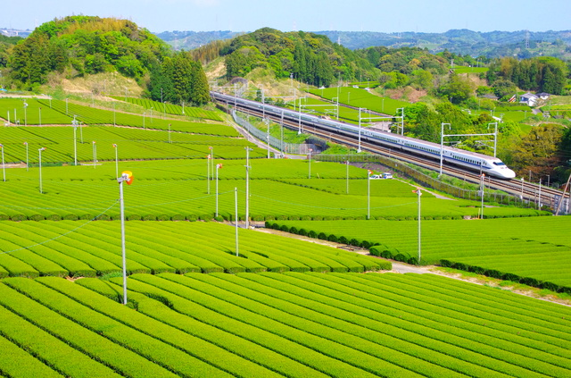 【掛川つま恋温泉】音楽の聖地として有名な総合リゾート