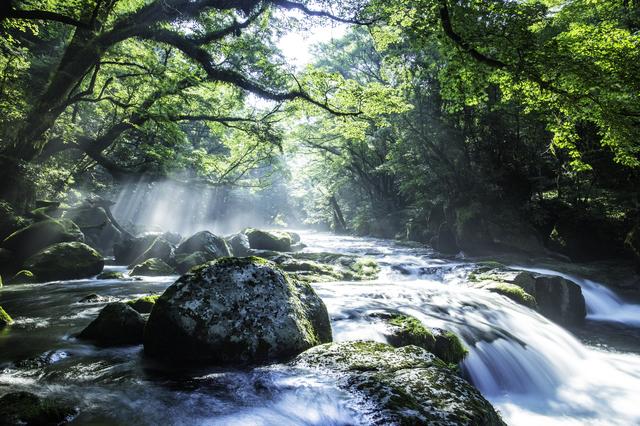 【白金温泉 黄金の湯】「農のオーベルジュ 白金の森」で楽しめる温泉