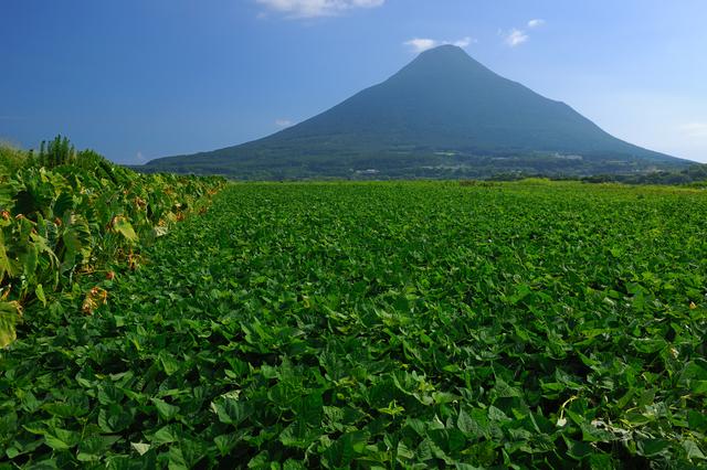【開聞温泉】山、海、花と大自然の美しさに見惚れる温泉地