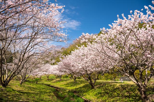 【あしがらの温泉】箱根連山のふもと、自然豊かな金太郎の里にある温泉地
