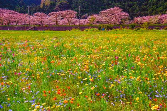 【桜田温泉】海へと続く道?!他では見れない絶景ここにあり。