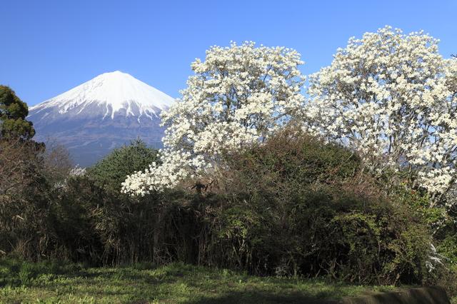 【瓜島温泉】夏はホタルが舞う 富士山麓の趣ある温泉地