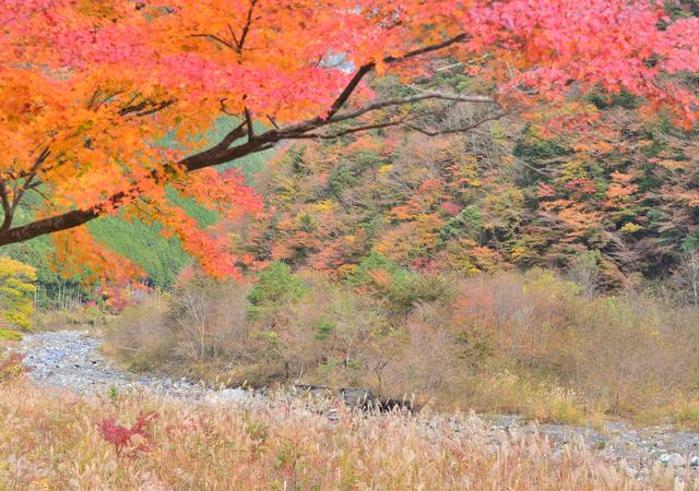 【梅ヶ島コンヤ温泉】安倍川の恵み!豊かな自然と治癒力抜群の温泉