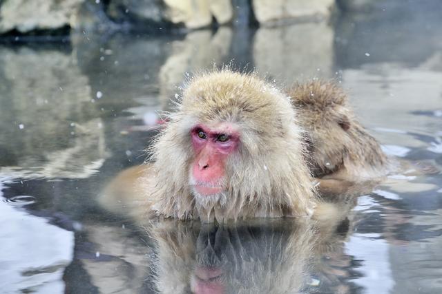【沓野温泉】志賀高原の美しい山並に囲まれた、素朴な温泉地