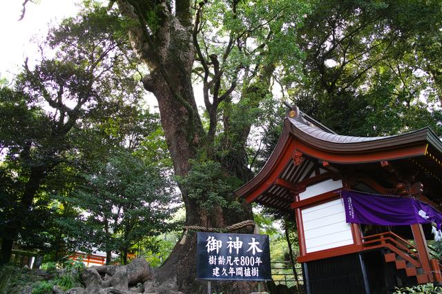 【殿湯温泉】「薩摩の殿湯」と呼ばれた、森に佇む温泉地