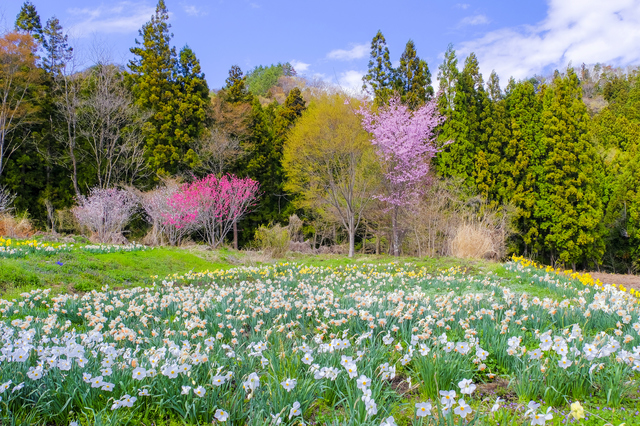 【奥平温泉】のどかな景色に囲まれて、ゆったりくつろぐ美人の湯