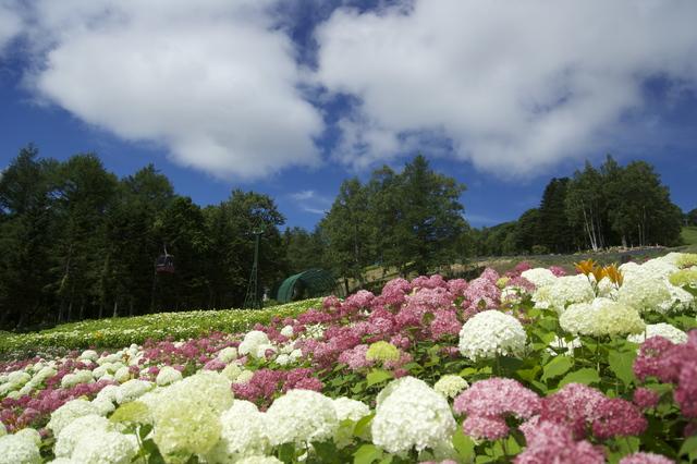 【岩下温泉】国登録有形文化財の中で入る山梨県最古の温泉